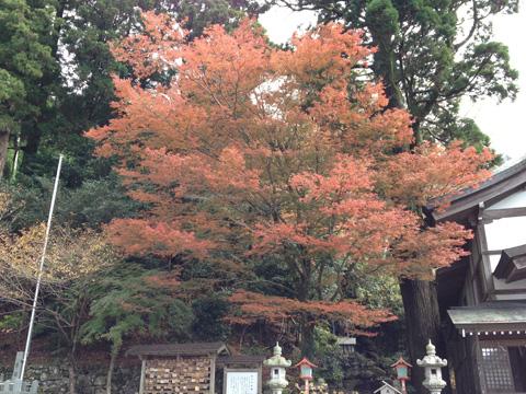 英彦山奉幣殿の紅葉